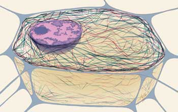 Human Physiology - Cell structure and function