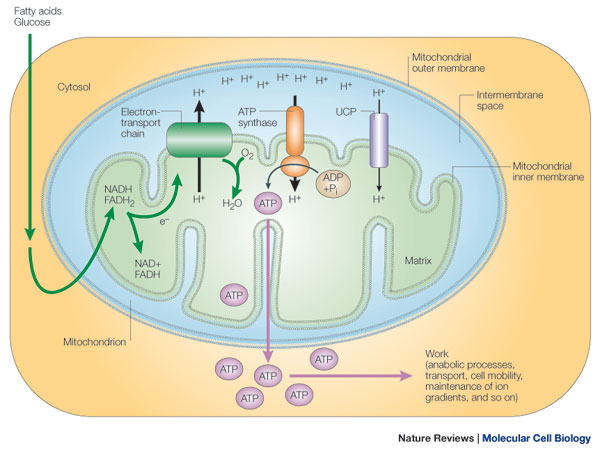 Human Physiology Cell Structure And Function