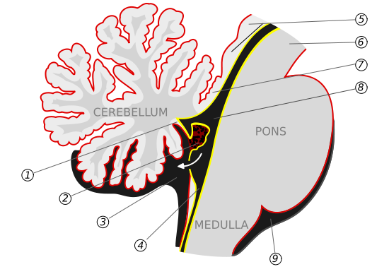 Right Cerebral Peduncle 6 Cerebral Peduncle