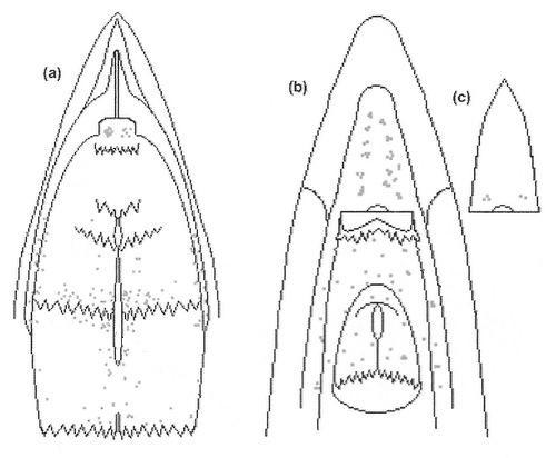 hummingbird tongue diagram