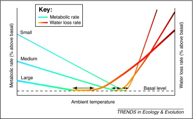 graph showing relationship between ambient temperature and metabolic rate  for large, medium-sized,