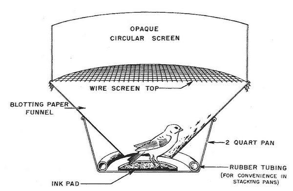 avian navigation and orientation Migratory Ducks birds could view the planetarium \u0027sky\u0027 through the opaque circular screen bottom, an example of a \u0027footprint\u0027 record (left) and a resulting vector diagram