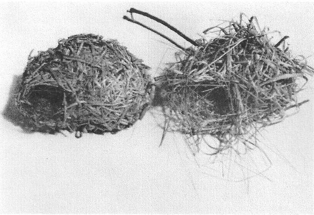 Line Drawing Nest : Bird nests