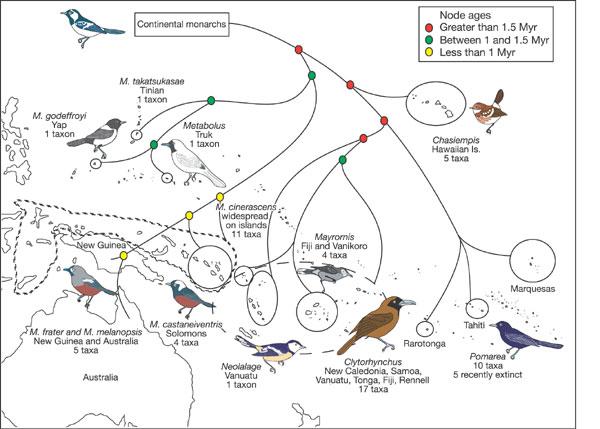 Bird biogeography