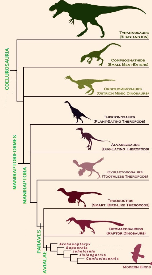 Theropod courtship dating