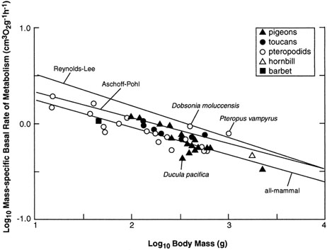 relationship between basal metabolic rate and mass