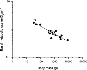 metabolic rate and body mass relationship in chemical equations