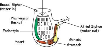 Comparative Vertebrate Anatomy - Lecture Notes 1