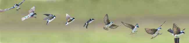 69 鸟类的飞行