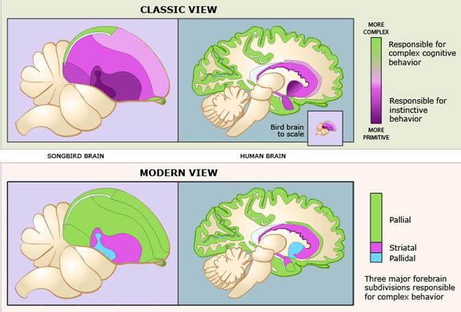 Avian Brain Senses