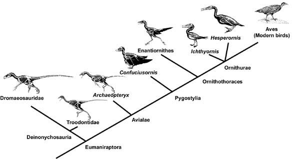 Ornithology Lecture No...